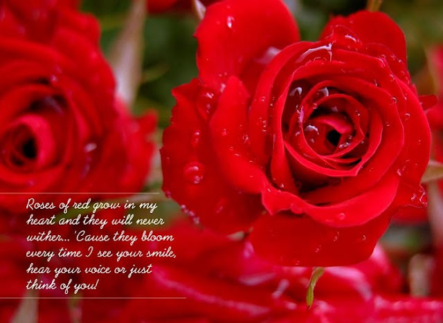 Best Rose Day SMS, rose day sms images