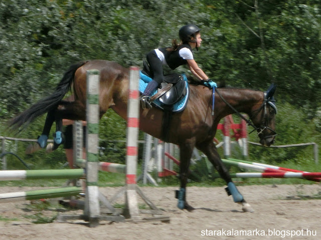 конная школа Будапешт