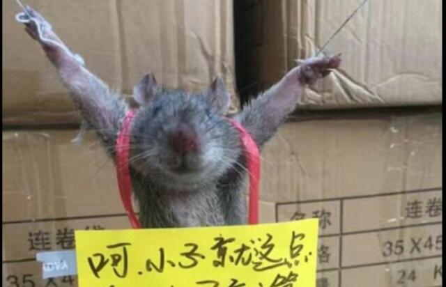 Rata roba arroz y la amarran para humillarla públicamente