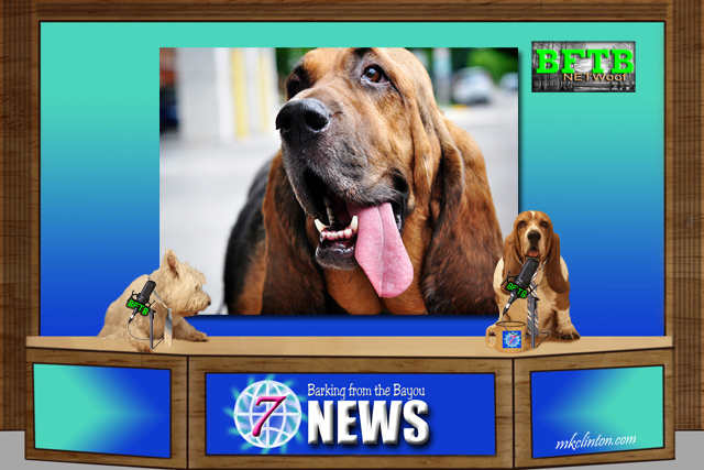 BFTB NETWoof News reports on hero Bloodhound