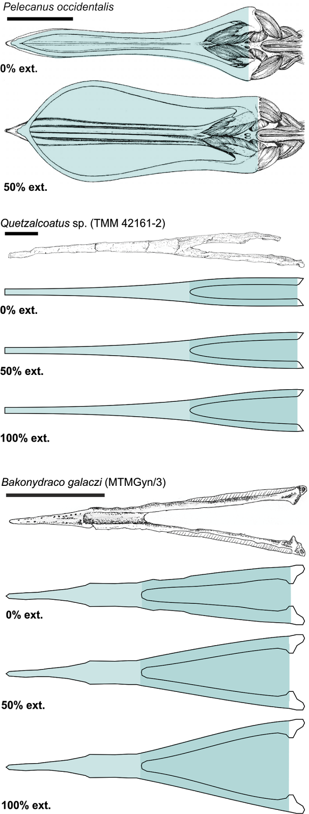 necking area measurement method