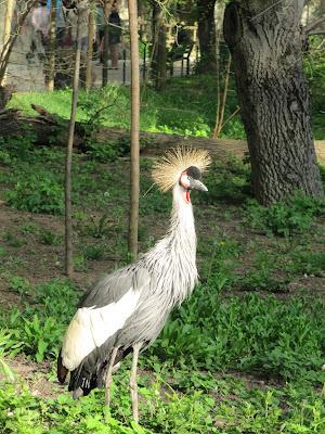 cocorul cu coroană zoo Chișinău