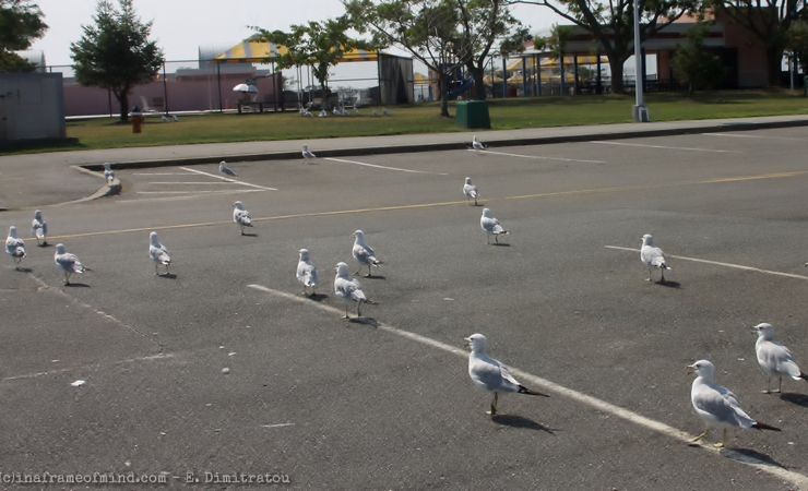 seagulls crossing to the other side
