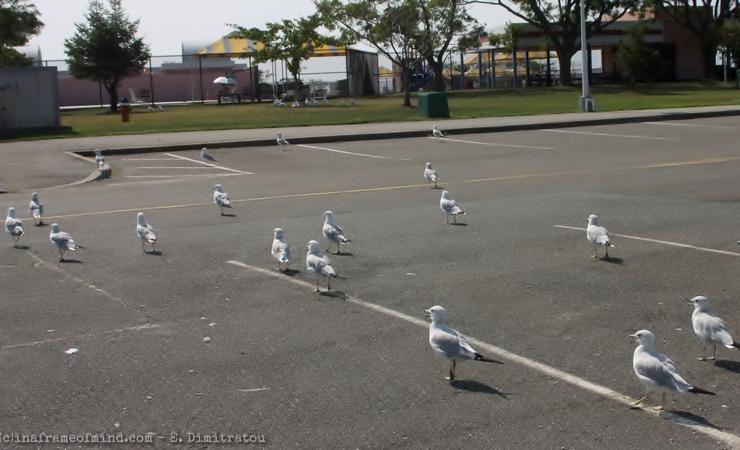 seagulls crossing