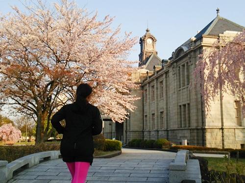 文翔館のレンガ造りに桜