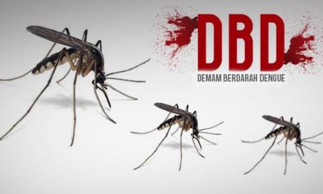3 Fase Demam Berdarah, No 2 Seperti Sembuh Ternyata Berbahaya
