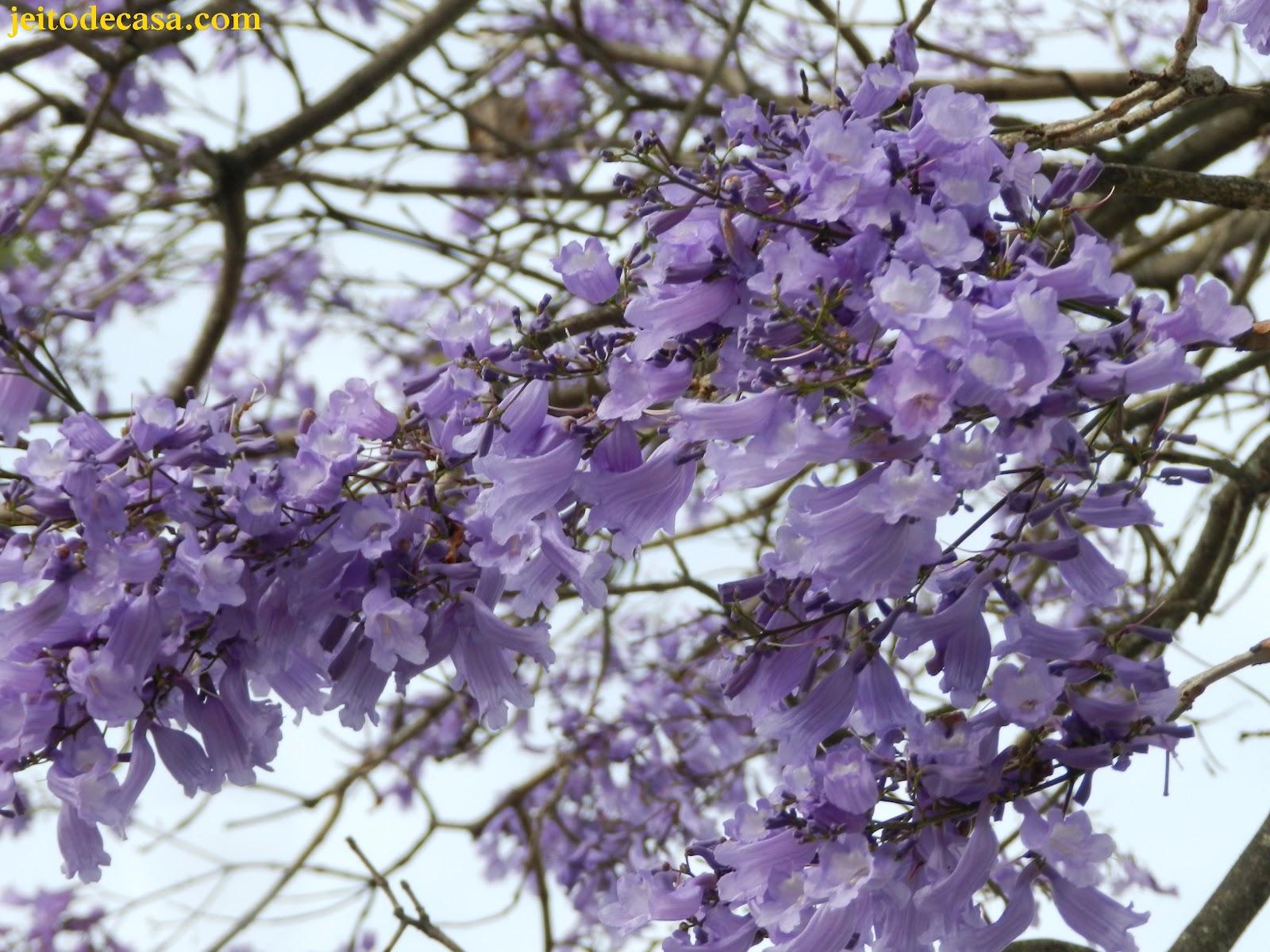 Muitas vezes Ipê-roxo ou jacarandá-mimoso? - Jeito de Casa - Blog de Decoração PO24