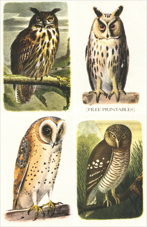 My Owl Barn: Printable Owl Images