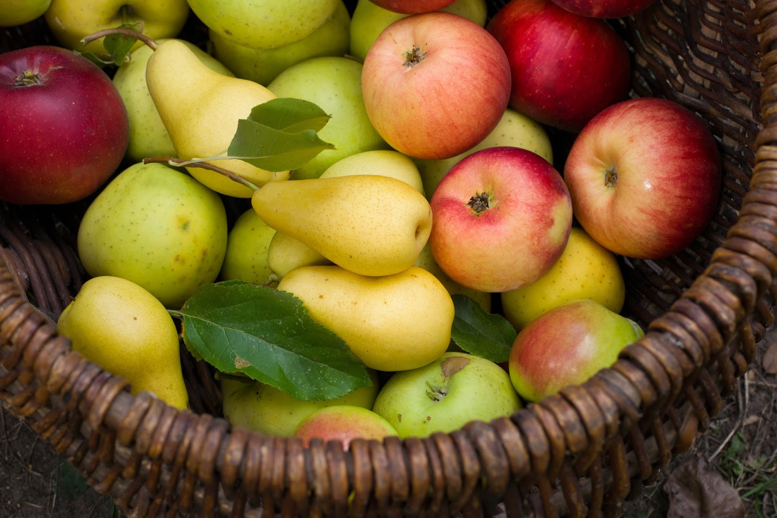 Ябълки и круши.