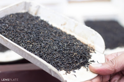 Amalgamated Plantations Tata Tea Guwahati Assam