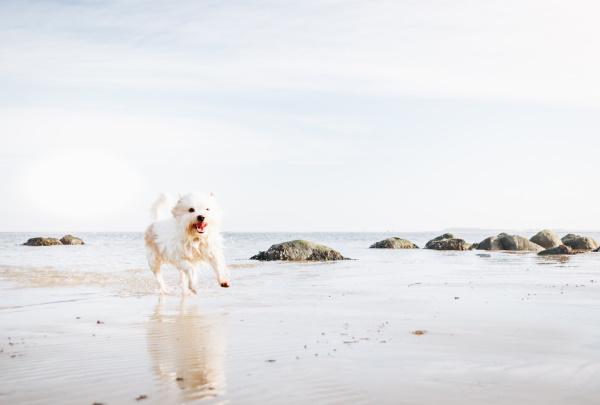 Hundestrand an der Ostsee - traumhafter Spaziergang am Meer