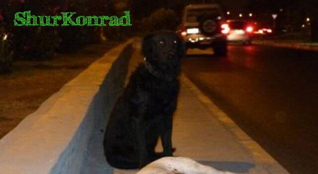 perro-no-abandona-perra ShurKonrad dog love puppy dead fiel amigo 4