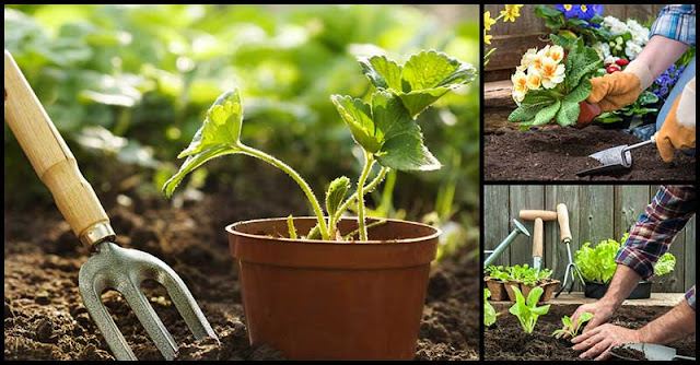 Gardening: How It Benefits Our Health