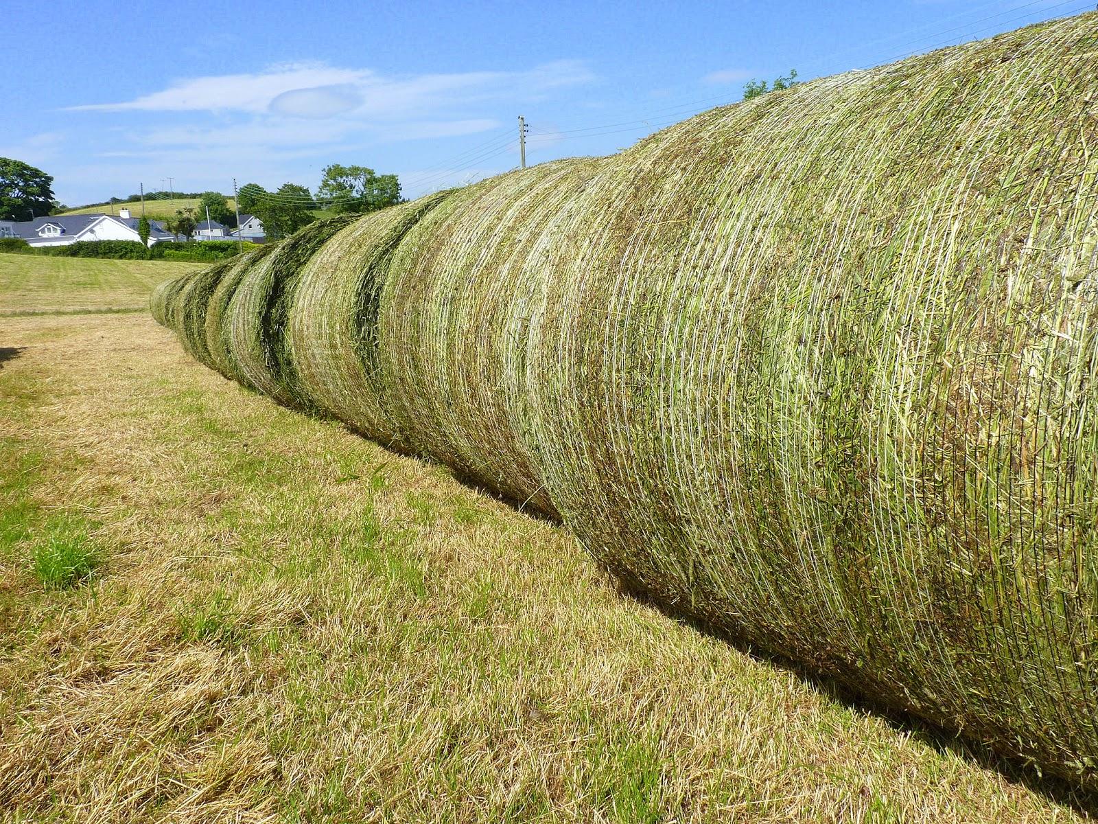 Image result for lucerne hay bales