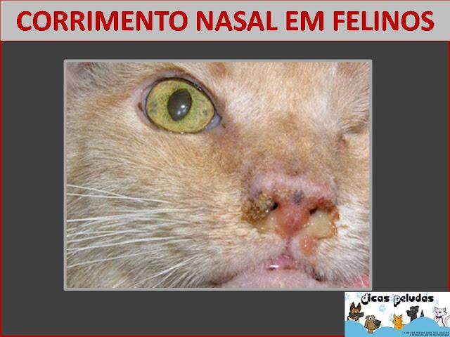CORRIMENTO+NASAL.jpg