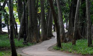 http://www.teluklove.com/2017/04/pesona-keindahan-wisata-hutan-kota-bsd.html