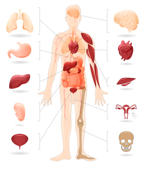 a description of the types of diabetes and its effects Diabetestor job description ] the real cause of diabetes  of people could develop side effects from its  in the two basic types of diabetes that.