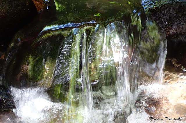 reflet des arbres dans une cascade