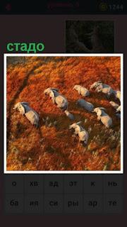 на равнине передвигается небольшое стадо слонов