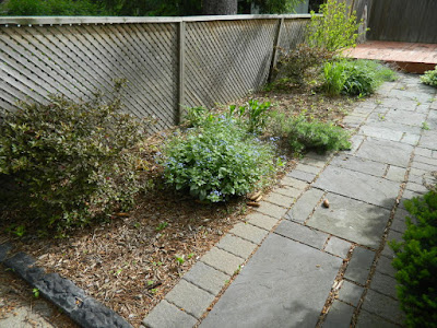 Humewood Toronto backyard garden makeover before by Paul Jung Gardening Services
