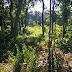 Polícia Ambiental localiza desmatamento no interior de Virmond