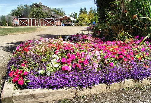 Edging design ideas flower bed edging ideas for Flowers for flower bed ideas