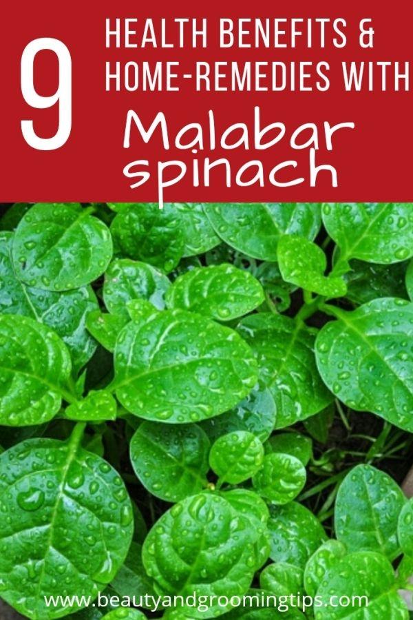 malabar spinach green variety