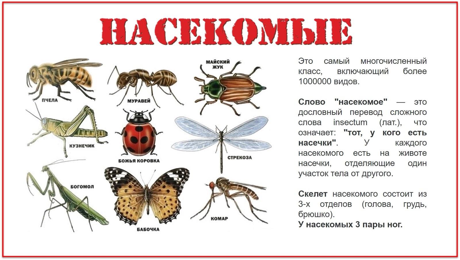 Картинки насекомых для детей с названиями и описанием