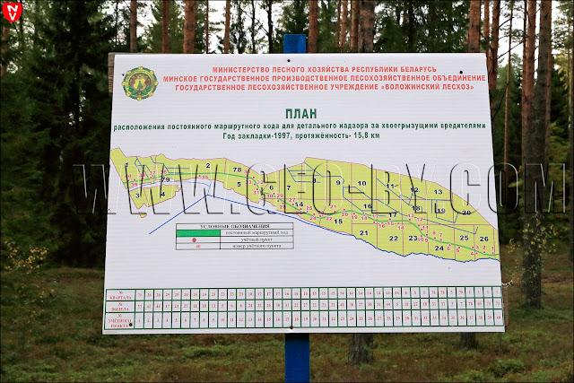 План расположения постоянного маршрутного хода для детального надзора за хвоегрызущими вредителями Год закладки - 1997, протяженность - 15.8 км