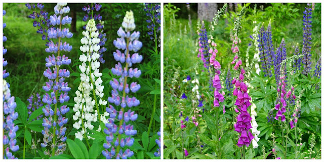 Lupinus and digitalis