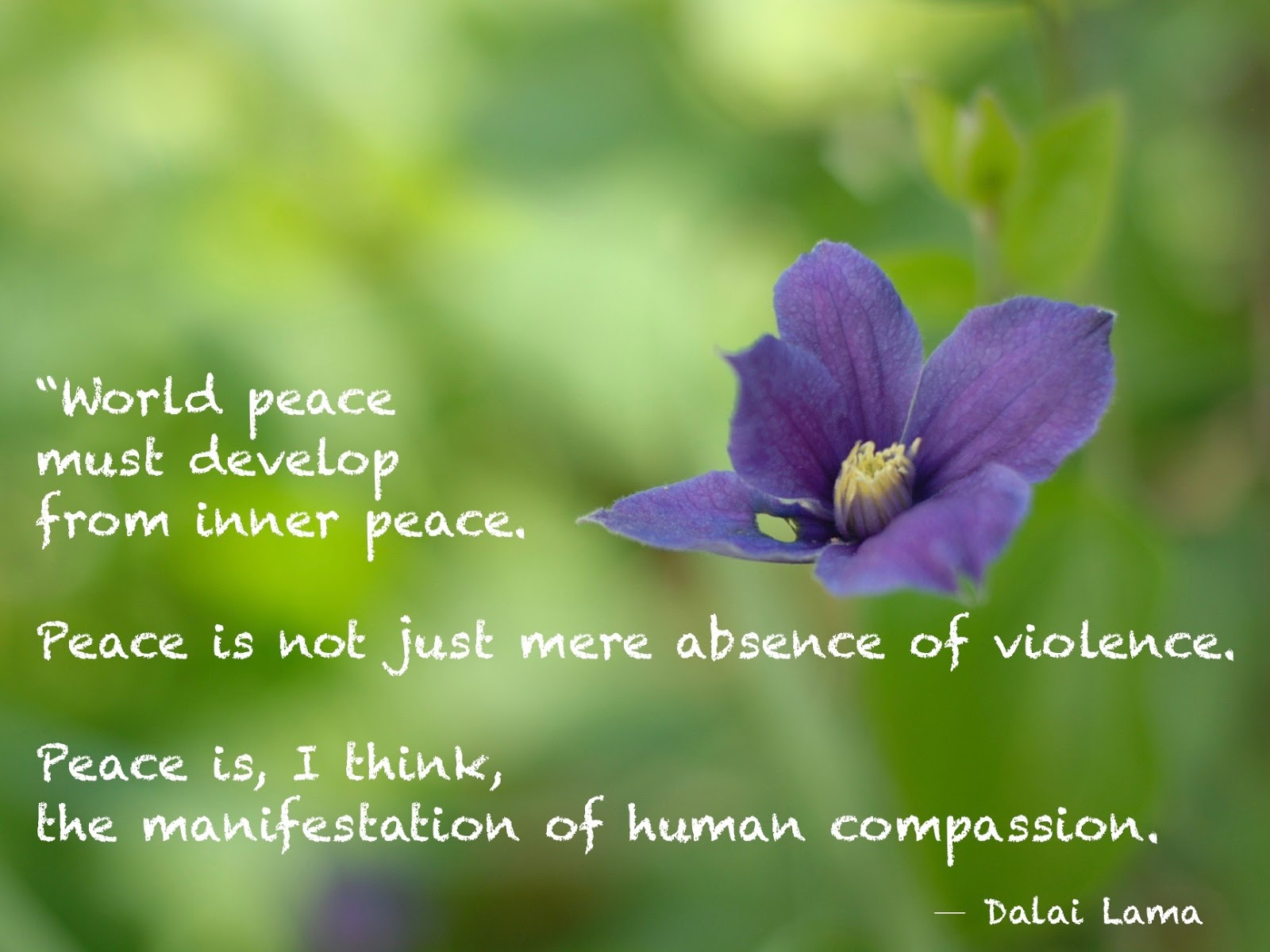 essay world peace nonviolence The world is desperately in need of non-violence as a way of life, to spread the gospel of love, brotherhood and peace man must awaken and realise that the world of violence in which he is living can blow up on his face at any time.