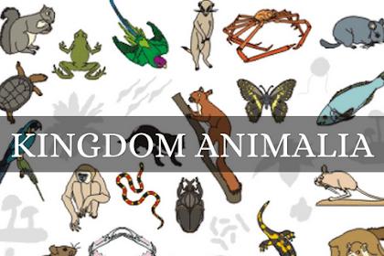 Tugas Presentasi Kingdom Animalia
