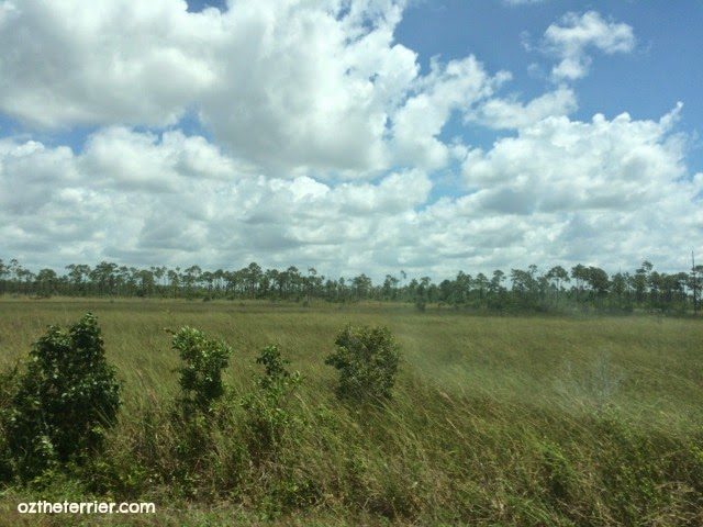 Florida Coastal Prairie leads into Hardwood Hammock | Everglades National Park