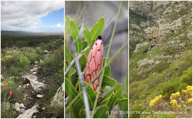 Fynbos and hiking path in the De Hoop Nature Reserve in South Africa