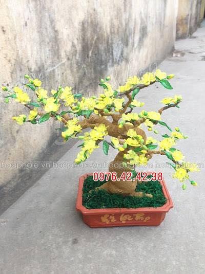 Goc bonsai cay hoa mai tai Hoang Dao Thuy