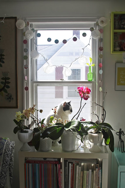 Orchids, cats, Studio, Anne Butera, My Giant Strawberry