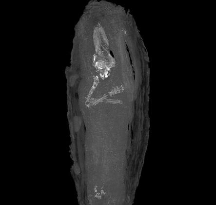La plus jeune momie égyptienne