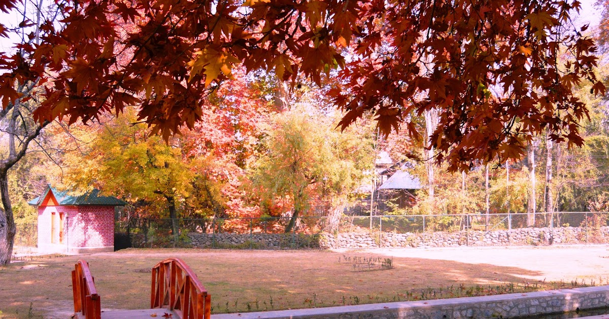 Water Falling Wallpaper Desktop Chinar Tree Wallpapers In Autumn In Dilnag Kashmir Hd