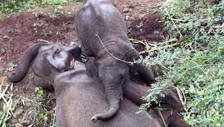 baby elephant heartbreaking photo