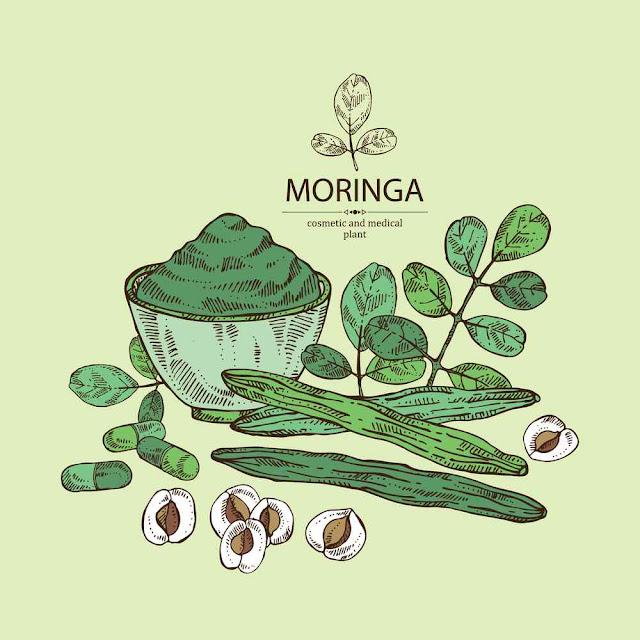 moringa : plant, leaves