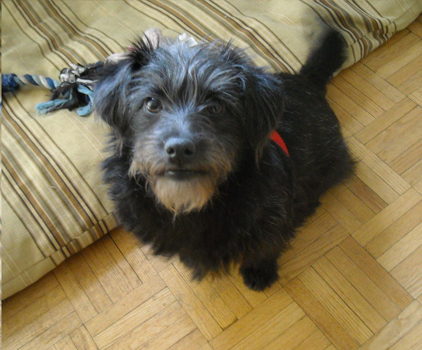 LOYAL Rescue Inc : Foster update - February 21, 2011