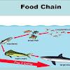 15 Contoh Rantai Makanan Di Laut, Gambar, dan Penjelasannya