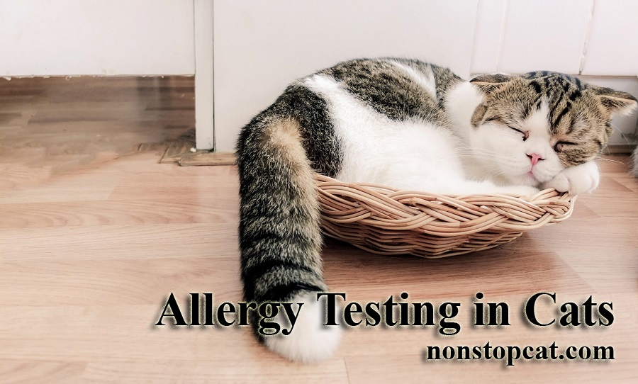 Allergy Testing in Cats