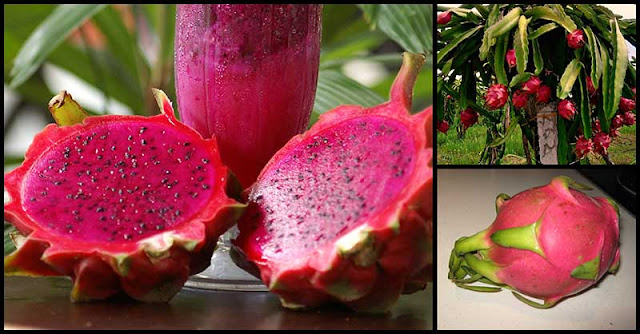 Dragon Fruit May Help Support Our Immune System