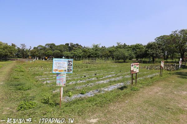 田園地景區,常辦理田園採收體驗活動