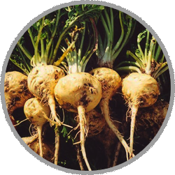 obat kuat, obat kuat biomate, macca root, khasiat maca root, manfaat akar maca, obat kuat biomate, biomate kiens, suplemen biomate,