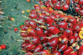 Lowongan Kerja Pekanbaru : PT. Kharisma Agro Sejahtera Juli 2017