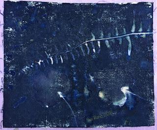 Wet cyanotype_Sue Reno_Image 267