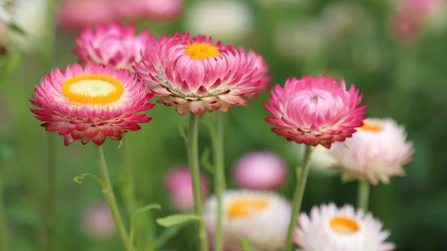 Kekuatan Bunga