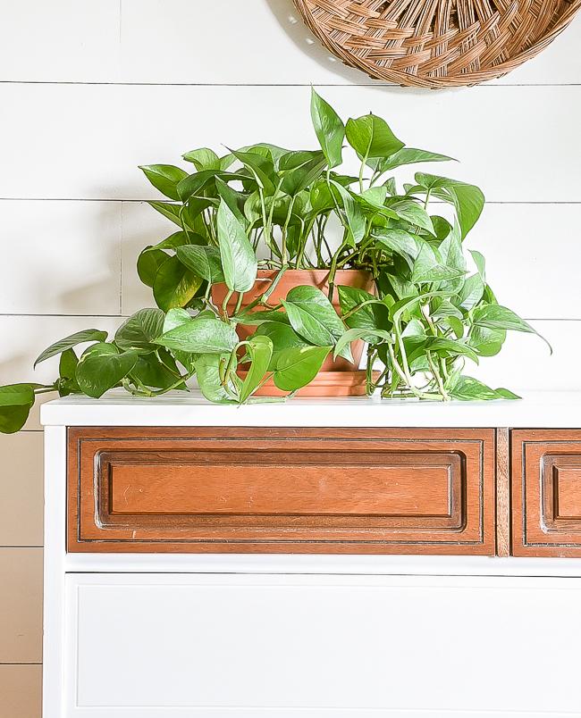 A beautiful vintage Bassett dresser gets a fresh modern look with a high contrast, two-tone makeover. #bassett #bassettdresser #paintedfurniture #mcm #mcmfurniture #furnituremakeover #twotonefurniture